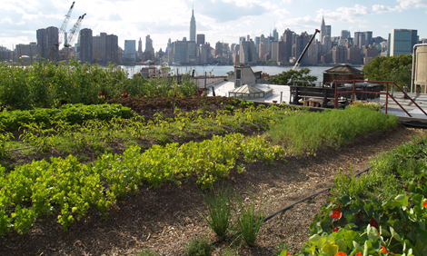 Farming In The City Hmh In The News