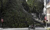 fallen tree in Pasadena