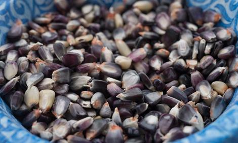 Cherokee White Eagle corn seeds